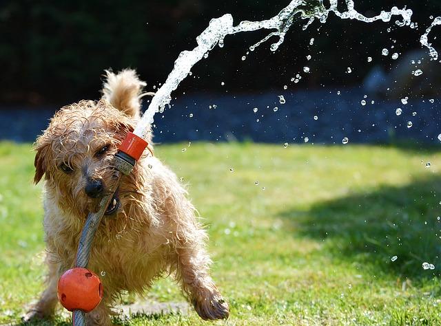 dog and waterhose